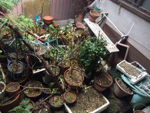 中庭鉢植え1