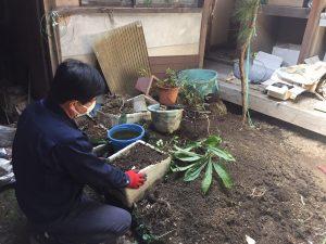 鉢植え中庭2