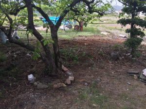 庭木レンガ1