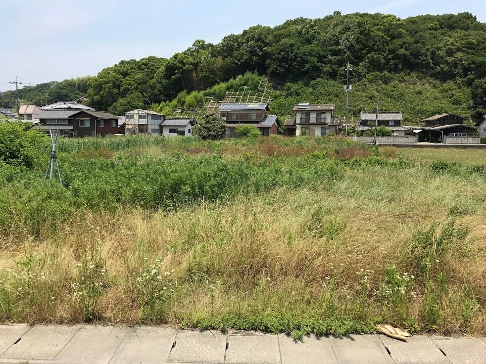 草刈り田んぼ2