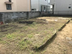 草伸び放題2