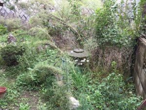 庭の草木1