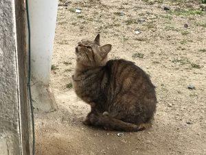 猫ちゃん1