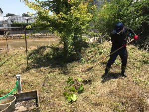 草刈り作業中 庭4