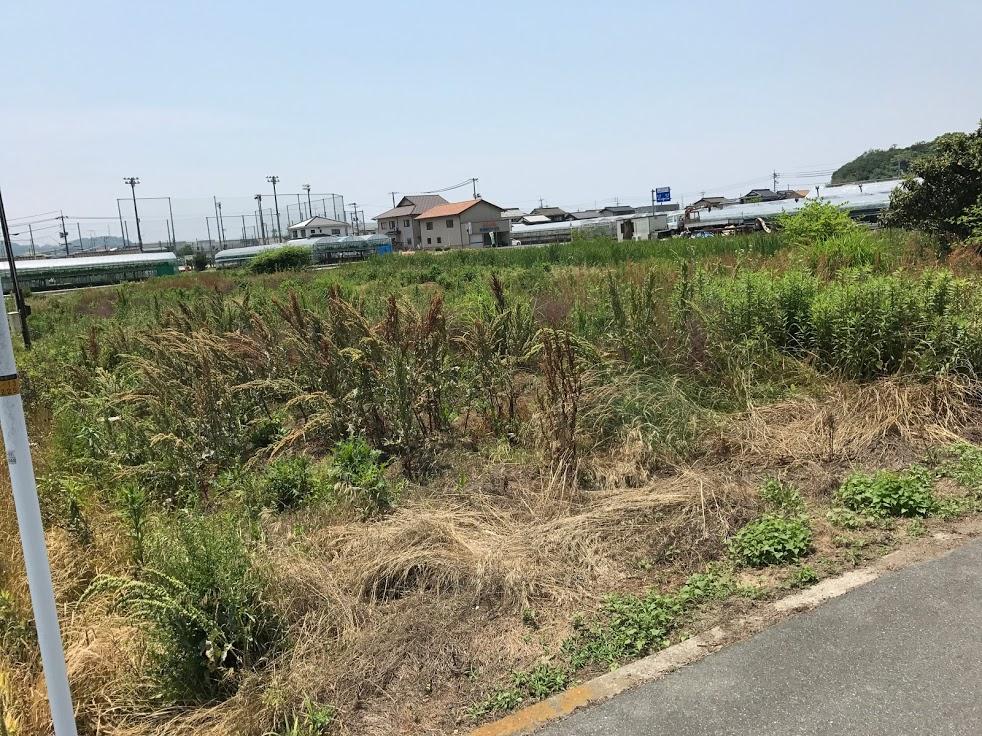 草刈り田んぼ1