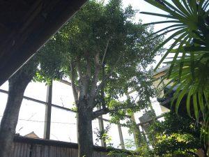 庭木の選定