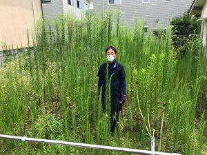 草伸び放題1