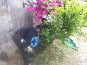 植木の移動